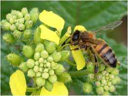 dangers,abeilles,silence,mortalité,inquiétude,monde,planète,société,nourriture,cultures,réflexion,comprendre,savoir,connaître