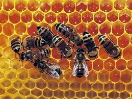 abeilles,silence,dangers,société,monde,planète,action,mortalité,santé,réflexion,comprendre,savoir,connaître