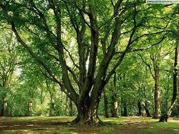 arbre,nature,biodiversité,air,qualités,force,bienfaits,organismes,oxygène,vie,source,protecteur,purificateur,réflexions,comprendre,savoir