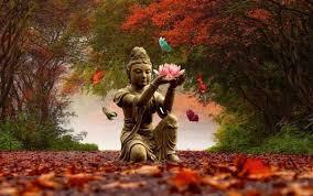 bouddha,zen,pensée,loi,univers,changement,philosophie,réflexion,comprendre,savoir,connaître