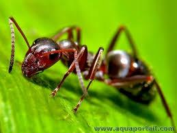fourmi,utilité,soigner,blessures,biodiversité,réflexions,médicaments,comprendre,savoir