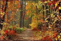 lamartine,automne,poète,poésie,farmonies,poétiques,réflexions,savoir,comprendre,connaître,écrivain,politicien