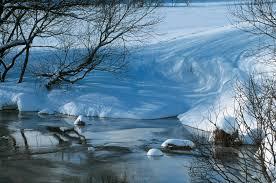 dickinson,poètesse,américaine,eaux,nature,écrivaine,gallimard,réflexions,comprendre,savoir,connaître