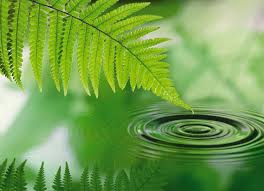 shakespeare,eaux,calme,pensée,philosophique,profonde,réflexion,comprendre,savoir,connaître