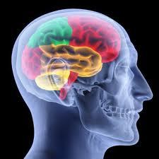 fonction,boite,crâne,corps,humain,siège,santé,bien-être,informations,réflexions,comprendre,savoir