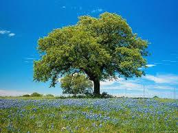 rabhi,poème,poète,philosophe,écrivain,société,arbre,réflexions,comprendre,savoir