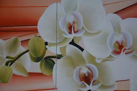 kôan,philosophe,homme,fleur,sourire,pensée,zen,amour,beauté,réflexion,comprendre,savoir,connaître